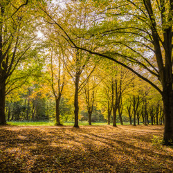 Amstelveen, NL - Autumn at the Amsterdamse Bos