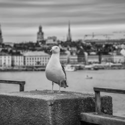 Stockholm, SE - The watchbird