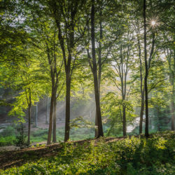 Rheden, NL - Rays in the forest