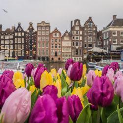 Tulipsterdam